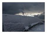 Snowy fence - 6026