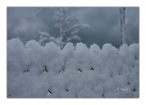 Grillage sous la neige -6041