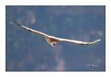 vautour - 3149