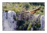vautour - 3400