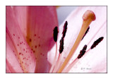1091 - Flower