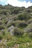 Anamur mrt 2008 5321.jpg