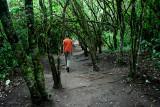 El Fuerte Forest