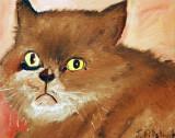 Muff the not so happy cat.
