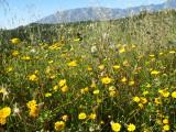 Flowers in May in Spain