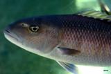 aquarium resident