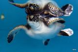 baby turtle at the aquarium