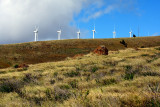 wind turbines maui