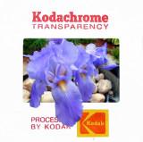 Matt's Iris as a OOF Kodachrome Slide