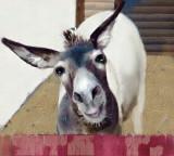Donkey Derby days Cripple Creek.jpg