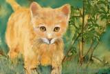 yellow cat1.jpg