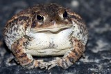 Well fed toad !!
