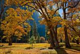 Fall Colors of Yosemite Valley.jpg