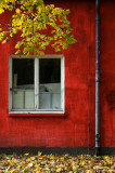 Red wall, leaves and window