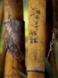 Bamboo Grafitti - Singapore