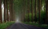 Country Road - Belgium
