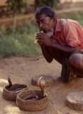 Snake Charmer, Sri Lanka