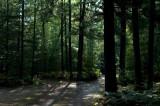 IMG, North Woods, 07.jpg