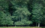 IMG, North Woods, 11.jpg