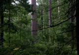 IMG, North Woods, 19.jpg