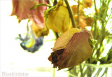 Beauty of a Life Well Lived - Dried Flowers