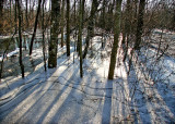 Wintry Wetland Afternoon
