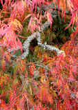 06 Lichen Branch and Flames