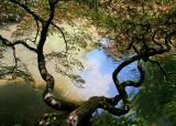 11 Shady Maple, Sunlit Pond