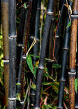 4 Black Bamboo