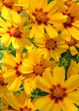 11 Sunny Flowers