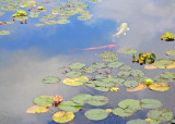 Monet in Seattle