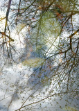 Branch Cloud Reflection