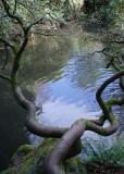 Kubota Pond