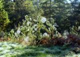 Fall Webs