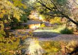 Golden River Pysht