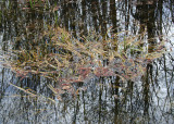 Grass and Reflections 2