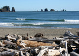 La Push Needles