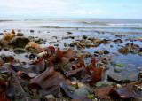 Seaweed at the Tideline