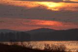 Sunrise Migration