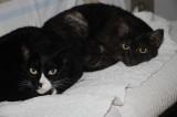Ikuyo's Cats - Happy & Dea