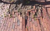 tree_bricks.jpg