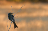 A bird from Namibia
