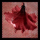 Hibiscus Flamenco