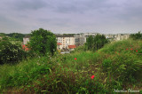 Bucolic in the city - 03