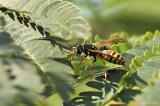guêpe -Wasp