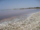 522 Pink Lake.jpg