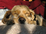 Lazy as a Dog.jpg