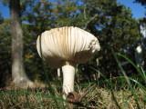 October Mushroom.jpg