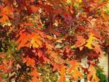 Foliage  Canvas.jpg