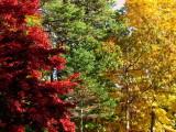 Autumn Rainbow.jpg